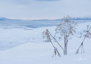 20170106_115849_Winter