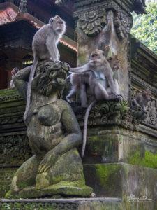 20170522_125824_Ubud-Monkey-Forest